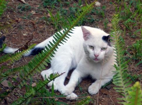 Cat in Bagheria