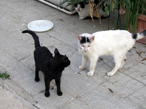 Cats in San Vito Lo Capo