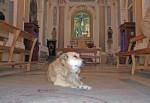 Italo … Sicily's famous dog